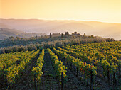 Vineyard and landscape with mansion near Panzano, Chianti, Tuscany, Italy