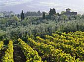 Vineyards and olive trees, Chianti, Tuscany, Italy