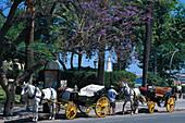 Horse drawn carriages on the roadside, Plaza de la Marina, Costa del Sol, Malaga, Andalusia, Spain, Europe
