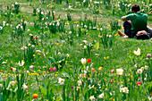 Springtime at tiergarten park, berlin, germany