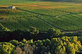 Weinfelder, Ebrotal, Ebrotal, La Rioja Spanien