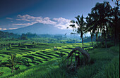 Rice fields and rice terraces, Vulkano Agung in the backgroung, Silebeng, Bali, Indonesia