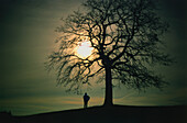 Solitary person standing in the moonlight by the silhouette of a tree