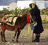 Karneval, geschmueckter Esel, Tefia, Fuerteventura Kanarische Inseln, Spanien