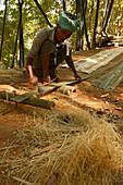 Cutting bamboo to make a fence, Bambus schneiden fuer einen Zaun, Yarzagyi Hills