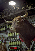 Bull head trophy in Tapas Bar, Madrid, Spain