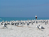 One person and a swarm of seagulls at the beach, Sanibel Island, Florida, America