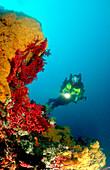 Taucher mit Kreislauftauchgeraet, Scuba diver with, Scuba diver with rebreather
