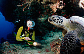 Hawksbill Turtle and Diver, Eretmochelys imbricata, Maldives, Indian Ocean, Felidu Atoll