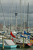 Auckland's yachting harbour, Jachthafen, Auckland, North Island, New Zealand