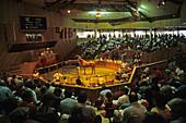 Horse auction, Race horse auction, Yearling Sales, Te Karaka, Gisborne,  North Island, New Zealand