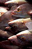 Fresh fish on beach, Zihuatanejo, Guerreo, Mexico, America