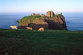 Burgruine Dunnottar am Abend, Stonehaven, Grampian, Aberdeenshire, Schottland, Großbritannien