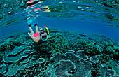Schnorcheln vor tropischer Insel, Split images, Sn, Snorkeling near an island, Scin diver, split image