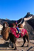 Camel, Great Chinese Wall, Badaling China