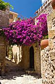 Lane with flowers, Monemvasia, Lakonia, Peloponnese, Greece