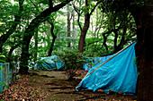 Homeless community in Ueno Park, Tokyo