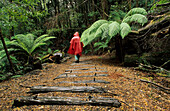 Woman on rainforest walk in red raincape, Montezuma Waterfall, along abandoned railway line and railway sleepers, Tasmania, Australia