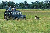 Tourists watching lions, Jeep Safari, National Park, Kenya, Africa