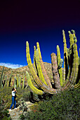 Woman taking a photograph of a giant cactus, Isla Catalan, Baja California Mexico, Central America, America