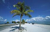 Palm tree at the beach, Sanibel, Florida, USA