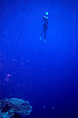 Freediving, a woman diving in the ocean, Soma Bay, Hurghada, Egypt