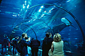 People watching fishes at the aquarium, Barcelona, Spain, Europe