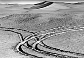 Jeep traces, Grand Erg Occidental Sahara, Algeria