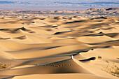 Aerial View, Grand Erg Occidental, Algerien, algerische Sahara Grand Erg Occidental, Duenenlandschaftencatalogue nature, Afrika, Wueste, Sand, Duenen, LichtstimmungEnglish: Grand Erg Occidental, desert, dunes, Algerian Sahara, Algeria