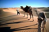 Camel driver with Caravan, Algerien, algerische Sahara, Grand Erg Occidental, KamelkarawaneWA 3.3 Wueste, Sandduenen, Duenen, Kamele, Afrikakat nature animals