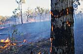 Bushfire in the outback,  Northern Territory, Australia