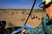 Heli-mustering Lansdowne Station, Kimberley, Australien, West Australien, WA, mustering cattle with a helicopter and horses, Kimberley