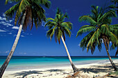 Palm beach with coconut palms, Dominican Republic, Greater Antilles, Antilles, Carribean, Central America, Northern America, America