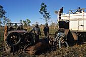 Aboriginal stockmen, Gibb River Station, Kimberley, Australien, West Australien, WA, Outback, North-West, Aboriginal stockmen catching wild bulls, on Gibb River Station