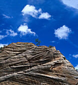 Low angle view at rock formation, Zion National Park, Utah, USA, America