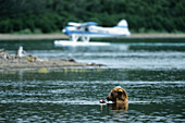 Grizzly Bear and Hydroplane, Katmai Nationalpark, Alaska, USA