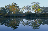 early morning reflections on Glenelg River, Grampians National Park, Victoria, Australia