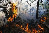 Summer Bushfire in Litchfield National Park,  forest fire in summer after dry period, North Australia, Australia