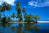 Palmenstrand, Kokospalmen, Tobago West Indies, Karibik