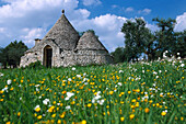 Flower meadow in front of Trullo House, Flower Meadow, Apulia, Italy