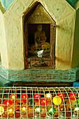 Buddha shrine, coloured lights, Mount Popa, Buddha Figur, und Bunte Birnen, Mount Popa gilt als Wohnstaette der 37 Nats, Geister die als Schutz fuer irdische Wohl Mount Popa, is where the 37 Nats originated, spirits responsible for earthly things, Buddha