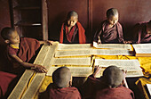young monks read religious Tibetan texts, monastery, Dharamsala, India