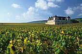 vineyard, Côte de Nuits, Burgundy, France