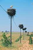 Stork nests on power poles, Alentejo, Portugal