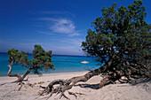 Sandy beach Plage de Saleccia, Desert des Agriates, Corsica, France