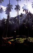Worker on a coconut plantation, Ua Huka, Marquesas, Polynesia