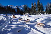 Alpencross, Dog-Sled-Race in the Dolomites South Tyrol, Italy