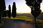 Typisch toskanische Landschaft am Abend, Toscana, Italien