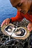 Pearl diver holding opened oyster with pearl, Palawan Island, Philippines, Asia