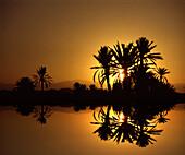 Oasis at Sahara desert at sunset, Merzouga, Morocco North Africa